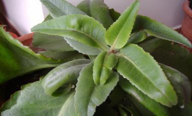 istockphoto_5830377-small-plant.jpg